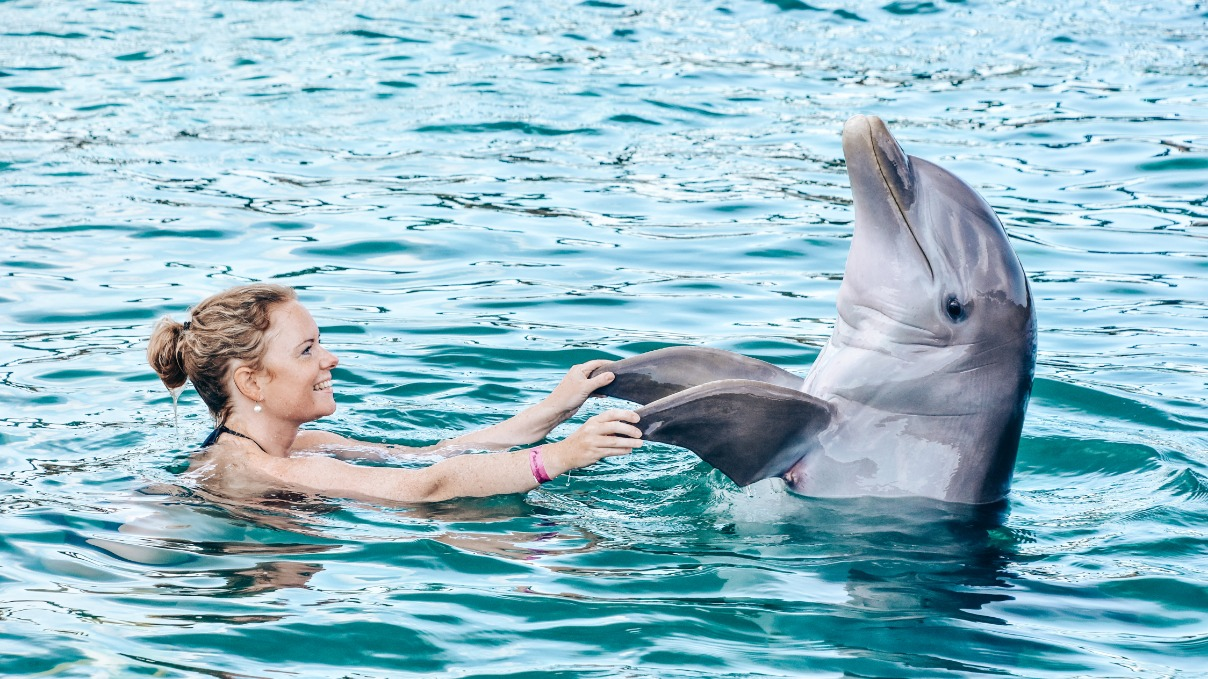 Dolfijnen Curaçao