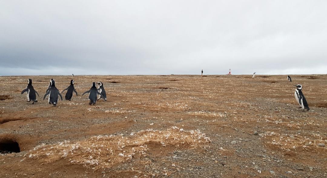 Isla Magdalena Patagonië
