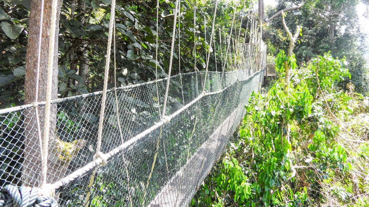 Maleisië Taman Negara jungle