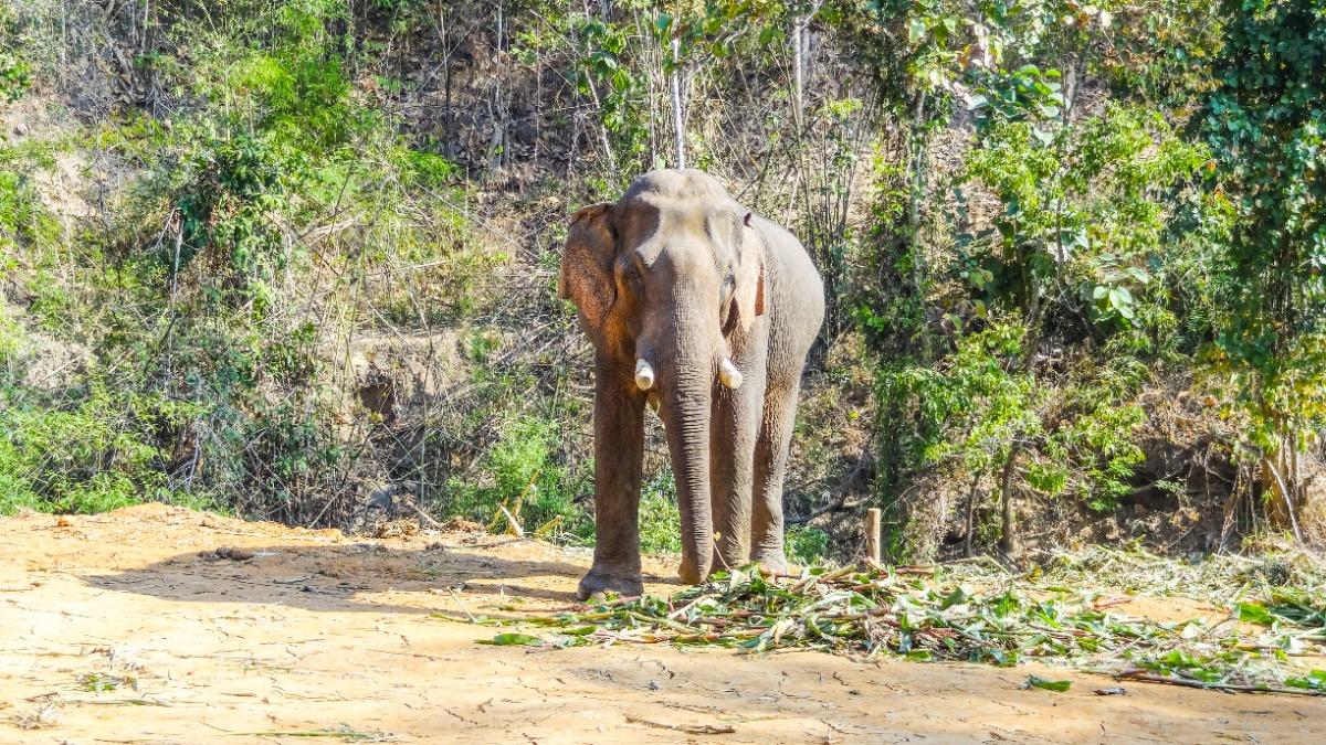 Opvangcentrum olifanten