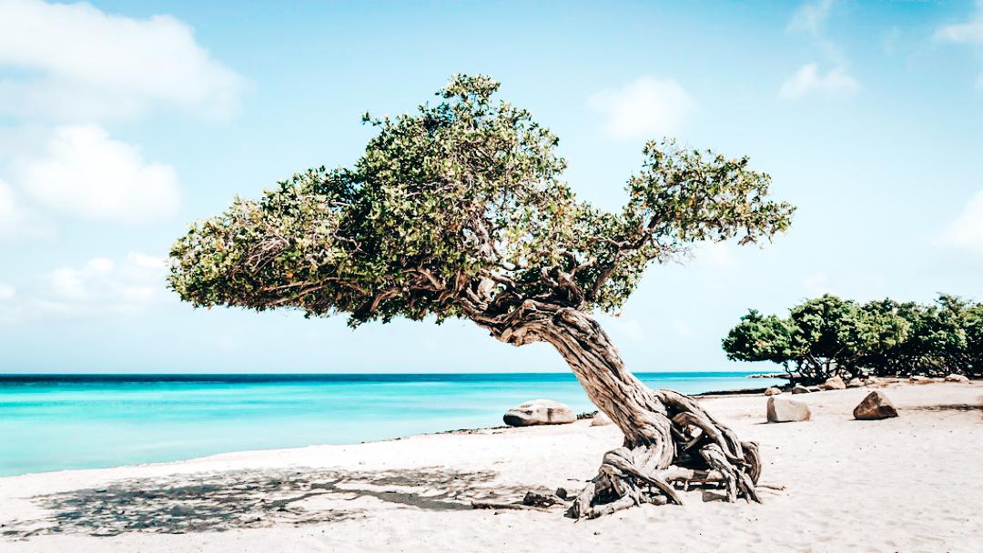 One happy island: 8x bezienswaardigheden op Aruba