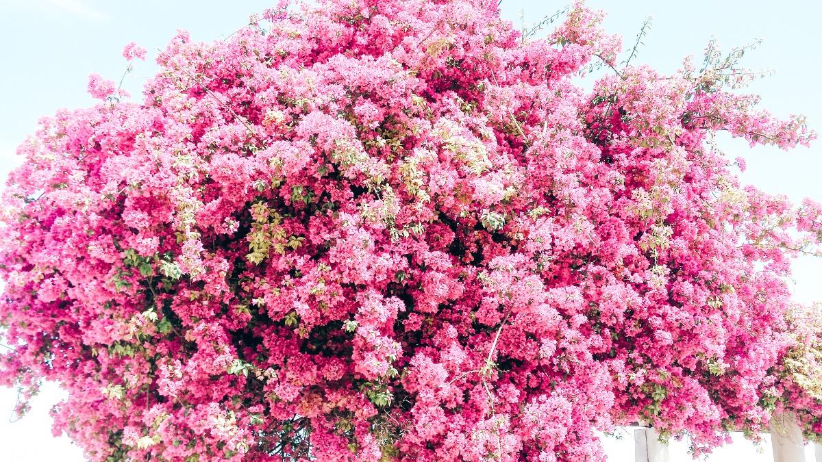 Portugese bloemen
