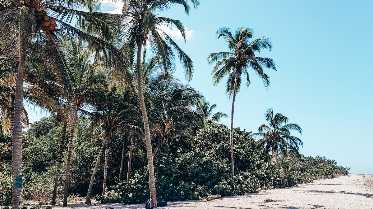 Palomino: where jungle meets beach in Colombia