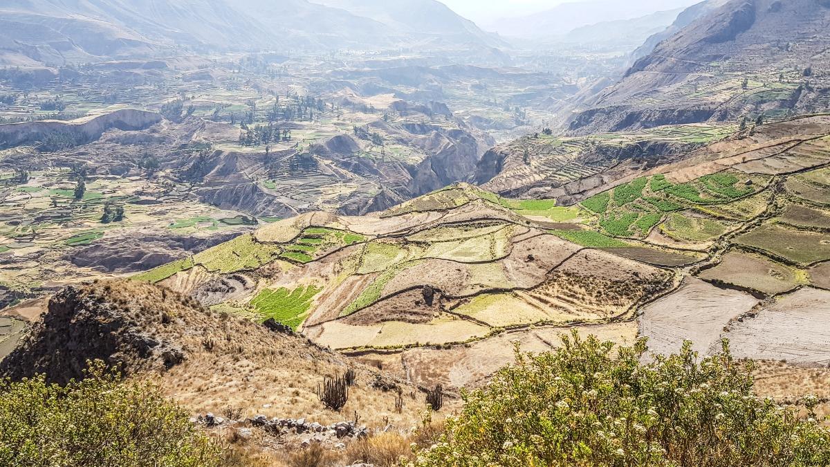 Quinoaveld Peru
