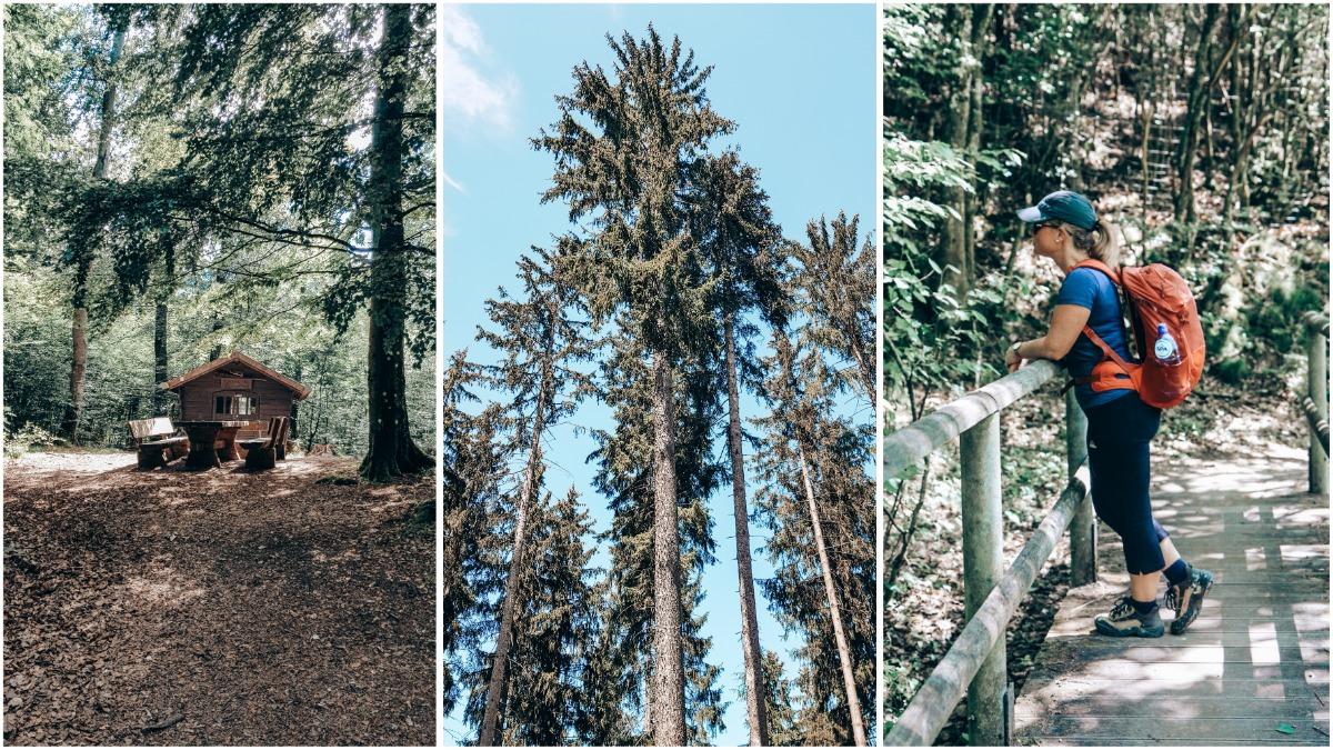 Wandelen in de Eifel bos